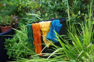 plant dyed silk in the garden