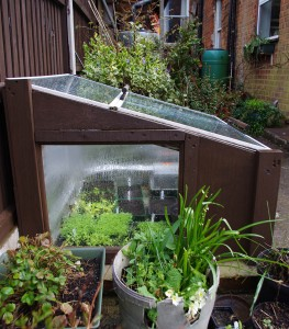 Cold Frame near the house