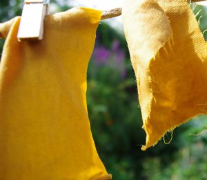 Exhaust bath Dyer's Coreopsis on alumed cotton jersey and cotton drill
