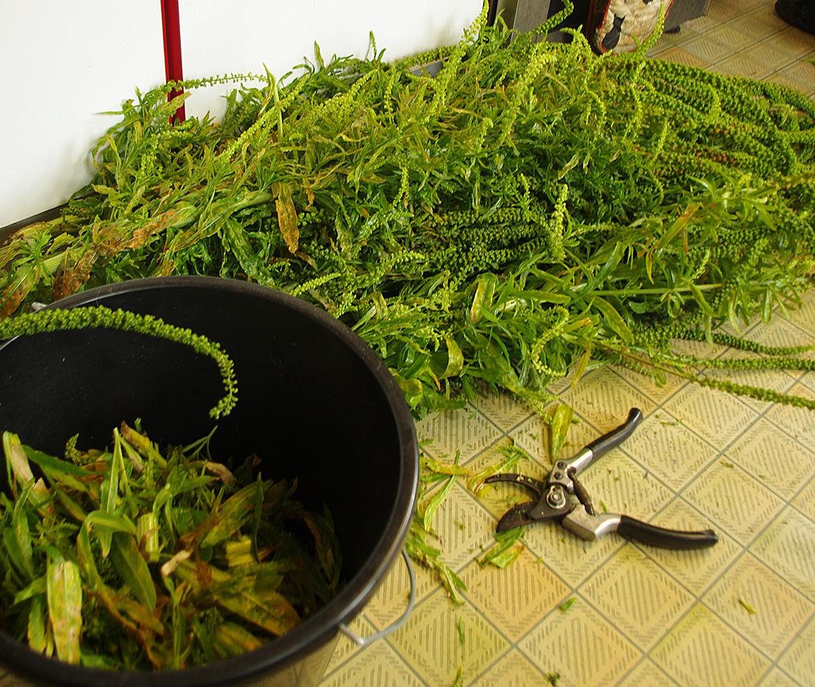 Weld harvest