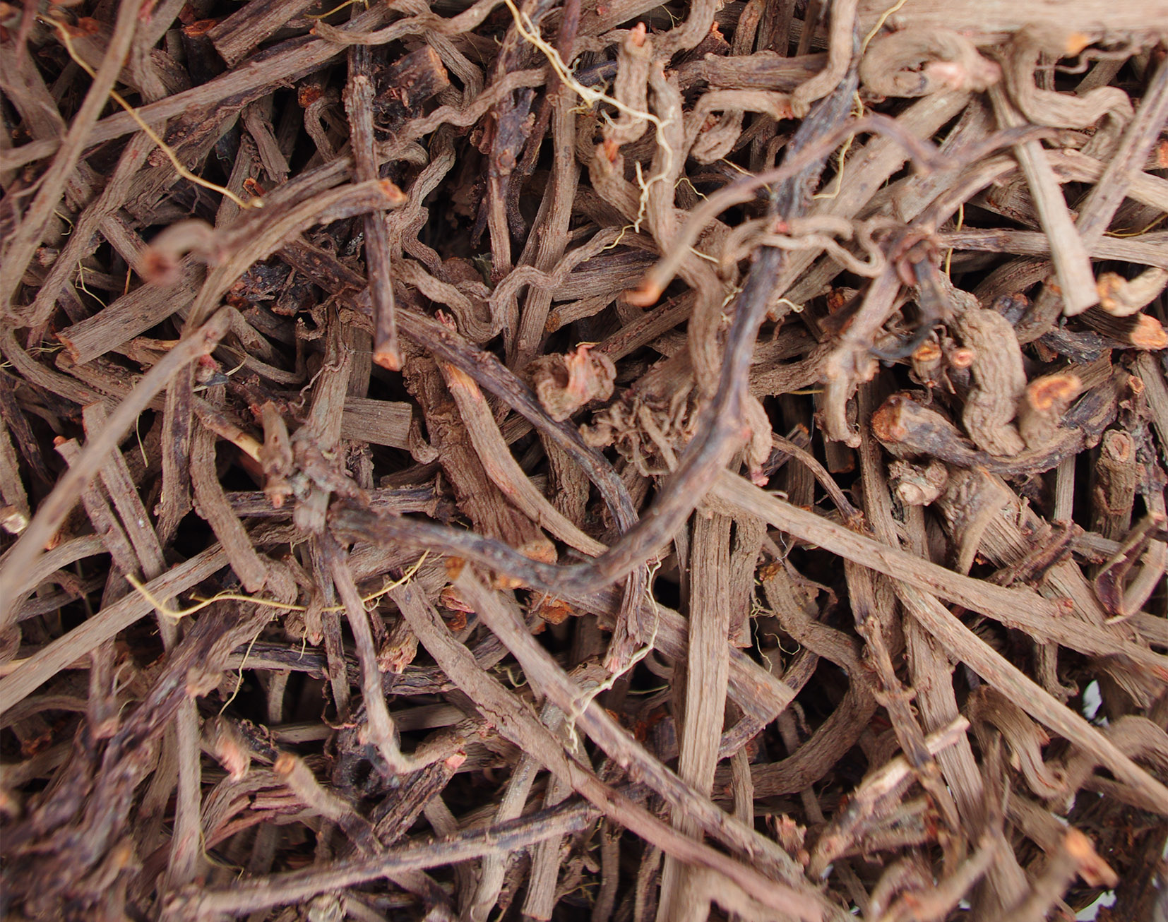 ransoms allotment madder root dried