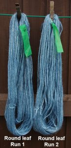 Wool dyed with Persicaria tinctoria