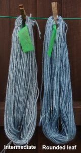Skeins of wool dyed with Japanese Indigo