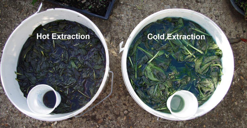 Indigo extraction from Japanese Indigo Hot and cold methods