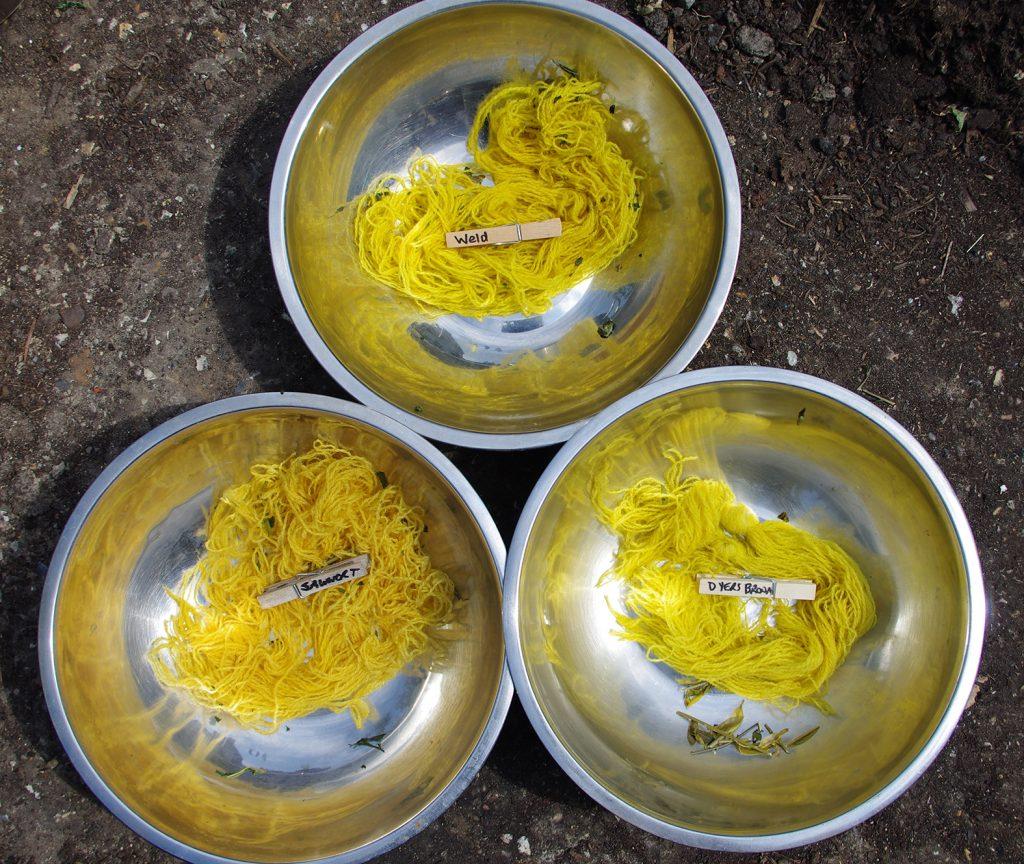 Serratula tinctoria dye comparison