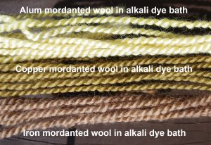 Shows different colours obtained by mordanting the wool with alum, copper and iron
