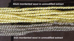Pale yellow alum mordanted wool top. Grey iron mordanted wool bottom
