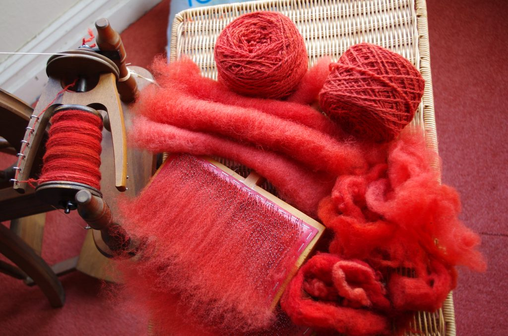Red madder dyed fleece being carded into rollags and spun into yarn